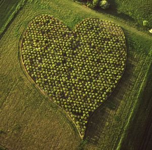 England - Aerial view, Heart Orchard, near Huish Hill