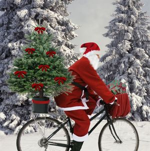 Father Christmas - on bicycle cycling past Fir Trees covered in snow