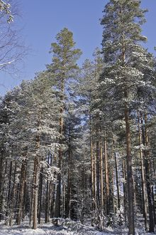 Finland - forest