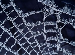 Frost on Spider's web