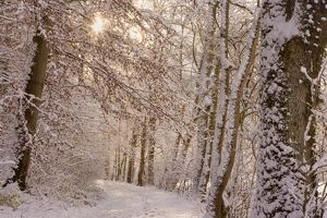 Frosty Winter Scene - winter landscape showing a foot path in a forest with thick