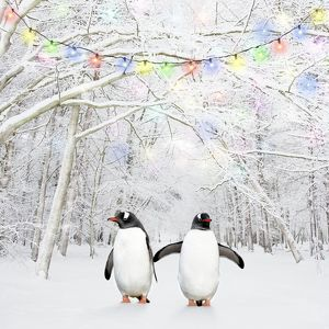 Gentoo Penguin - in winter woodland with snow and Christmas lights
