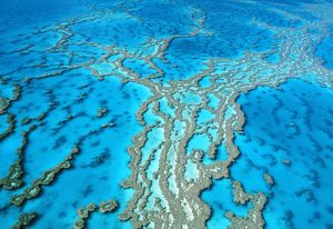 Great Barrier Reef Marine Park - Hardy Reef