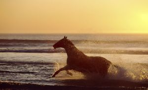 Horse galloping through surf - At sunset