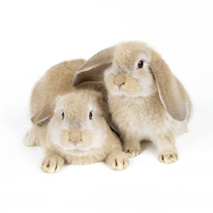 JD-13829 LOP-EARED RABBIT- two