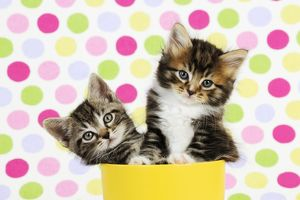 <b>Kittens</b><br>Selection of 391 items