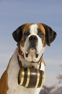 LA-5583 Dog - St Bernard - Mountain Rescue dog wearing barrel round neck