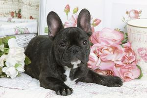 LA-6021 Dog - French Bulldog with flowers