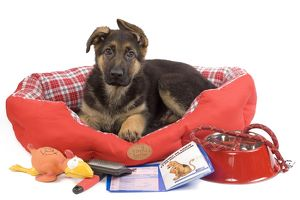 LA-7196 Dog - German Shepherd - puppy in dog bed