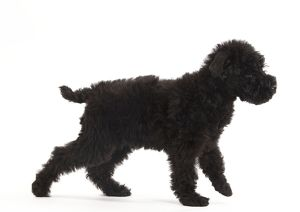 <b>Kerry Blue Terrier</b><br>Selection of 23 items