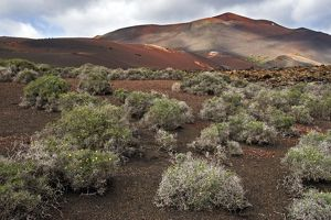Lanzarote - volcanic landscape near to Timanfaya