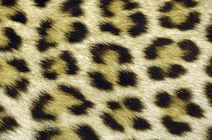 Leopard spots - showing markings