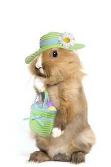 Lion-headed Dwarf Rabbit - easter bunny wearing hat & carying handbag full of easter eggs