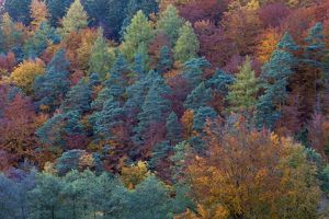 Mixed Woodland - with autumn colour