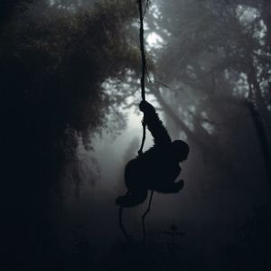Mountain Gorilla - Hanging on vine