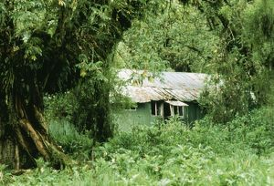 The Mountain Gorilla Story - Diane Fossey's house at Karisoke Camp in Parc des