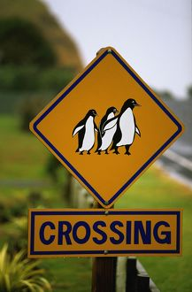 Penguin crossing road sign