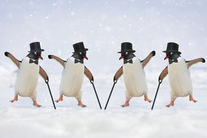 Penguins - dancing wearing top hats & holding canes