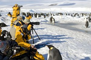 Photographers - Photogaphing Emperor Penguins at Rookery