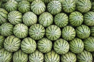 PM-10251 Water melons for sale in India (but cultivated widely elsewhere).