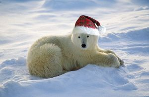 Polar Bear - with Christmas hat