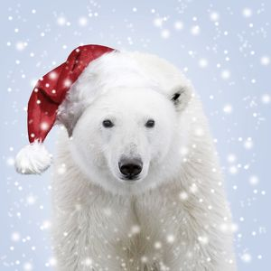 Polar Bear wearing a red Santa Christmas hat in the snow