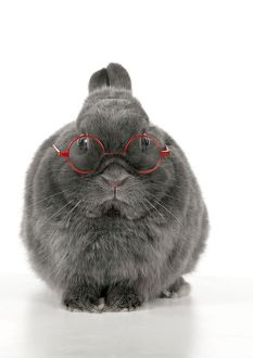 RABBIT - Dwarf rabbit wearing glasses