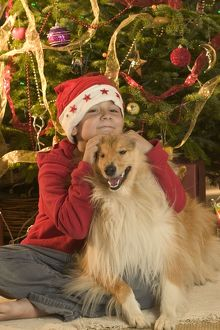 Rough Collie Dog - at Christmas with boy by Christmas tree