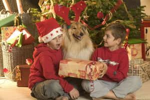Rough Collie Dog - at Christmas with two boys &