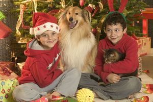 Rough Collie Dog & Tabby Cat - at Christmas with