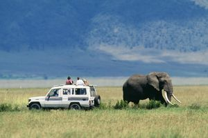 SAFARI - Tourists in vehicle and African Elephant