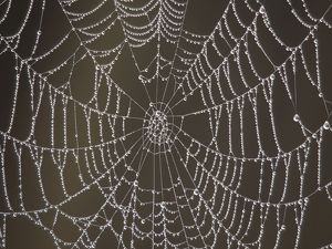 Spider's Web - with morning dew