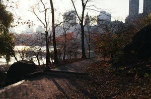 USA - Central Park in Autumn, with fallen leaves