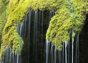 Veil fall - water cascading down sinter deposits covered with moss
