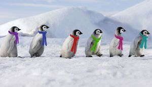 WAT-10863-M3 Emperor Penguins. 6 young ones walking in a line wearing scarves