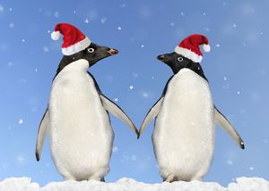 WAT-13613-M1 Adelie Penguin - holding hands wearing Christmas hats