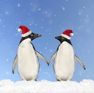 WAT-13613-M3 Adelie Penguin - holding hands wearing Christmas hats