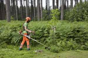 Worker - man at work with brush cutter in forest
