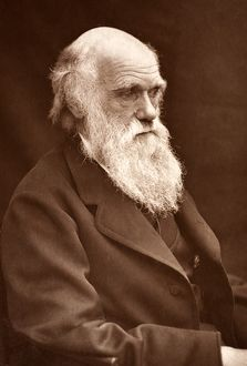 1874 Charles Darwin picture by Leonard.