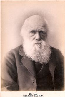 1879 Charles Darwin at eighty years old
