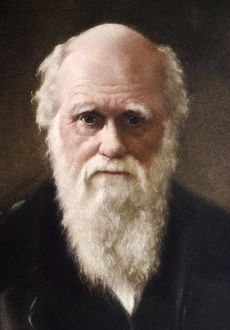 1881 Charles Darwin Face portrait