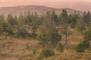 Scotland, The Isle of Lewis, Aline Community Woodland