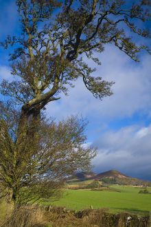 Scotland, Scottish Borders, Eildon Hills.