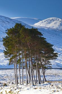 Scotland, Scottish Highlands, Dirrie More.