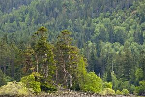 Scotland, Scottish Highlands, Loch Laggan