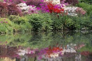 Azaleas in bloom reflected in still water