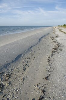Beach, Sanibel Island, Gulf Coast, Florida, United States of America, North America