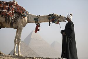 A Bedouin guide with his camel, overlooking the Pyramids of Giza, UNESCO World Heritage Site