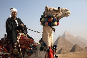 A Bedouin guide with his camel, overlooking the Pyramids of Giza, Cairo