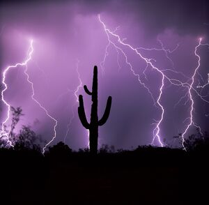 Cactus silhouetted against lightning